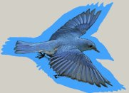 bluebirdofhappiness1